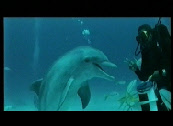 images de dauphins video dolphins